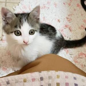 ミラクル子猫