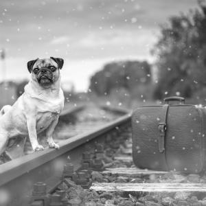 愛犬と電車に乗るときはこれだけ知っていればOKです。