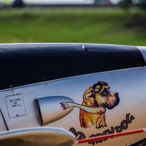 犬って飛行機に乗れるの?荷室預かりしてもらえる国内線航空会社はこれだけあります。