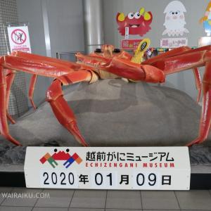 福井県で越前ガニが食べ放題「うおいち」へ行ってきました。海鮮で満腹。