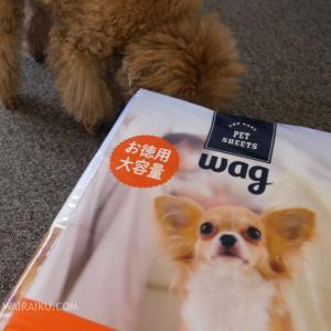 【使用レビュー】Amazonブランドのペットシーツ 「Wag 薄型 1回使い捨て レギュラー 300枚」を購入してみました。