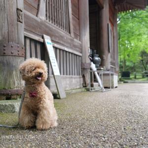 愛犬と世界遺産・比叡山延暦寺をおさんぽしてきたよ!牛さんも供養されてるの知ってる?