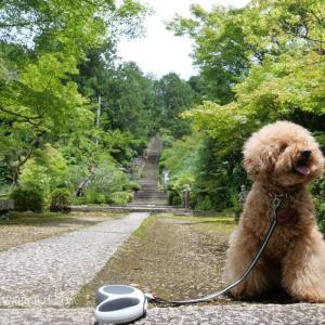 石塔寺を愛犬とお参り。インドのアショカ王の石柱は滋賀にあったよ!