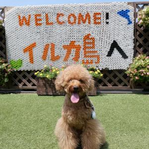 【リードOK】夏のイルカ島を愛犬と散策!コロナ禍で人気の観光スポットでした。