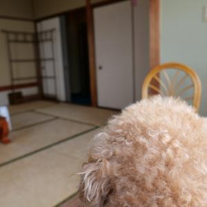 愛犬と泊まれる旅館 まつしん|海と神社が見える部屋で海の幸を食べて満腹になって寝る。