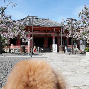 日本三観音の一つ、津観音を愛犬とお参り!