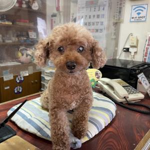 ペットと泊まれる民宿ヤマトに宿泊したら気分は宿場で疲れを癒す旅人!