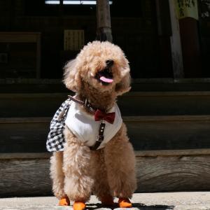 太江寺を愛犬とお参り!守り石はペットの病気平癒にご利益あり!