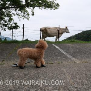黒沢牧場のドッグランで愛犬と遊んできたよ!