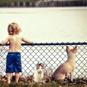 保護犬猫を飼いたい人が知っておいたほうがいい事実。