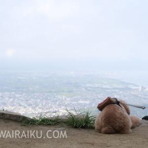 ~天空の鳥居~高屋神社の絶景を見に愛犬を車に乗せて行ってきたよ!