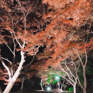 もみじ谷のライトアップ