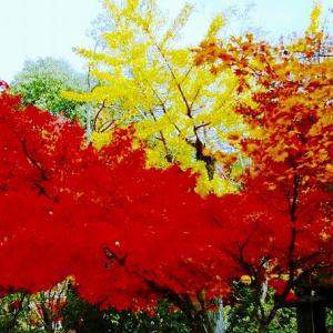 安芸宮島の紅葉を撮影しました。