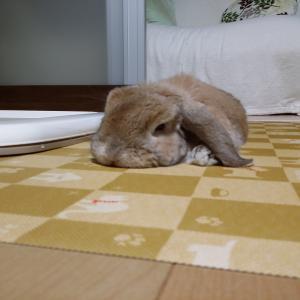 モフカフェでのんびり(^-^;(^-^;