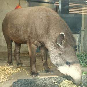 京都動物園がよい