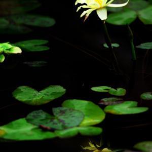 ~写真~ 水中の花・華