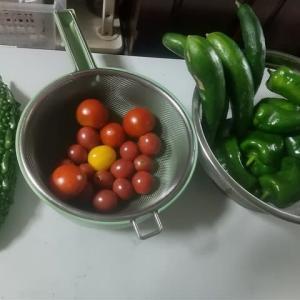 今日の収穫4種類