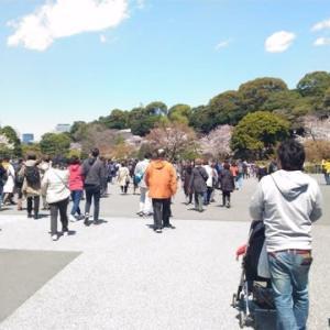 皇居の桜の通り抜け