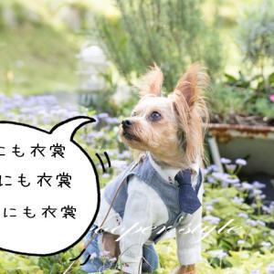 ★オシャレ度UP!犬もベストを着るだけで簡単センスアップ