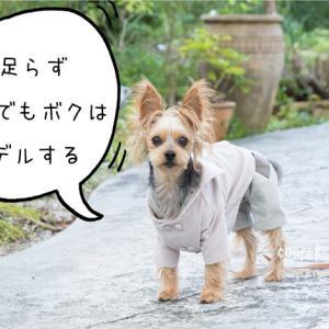 ★季節先取り?薄手コーデュロイの犬用アウター