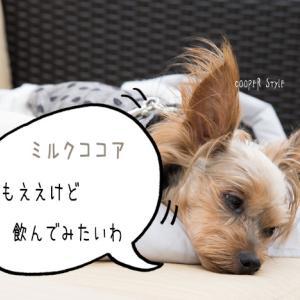 ★犬の秋色ファッション!ミルクココアな半袖シャツ