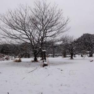 やっぱり雪が降ったねぇ・・・