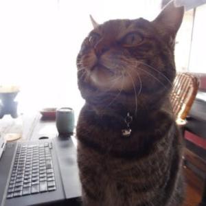 猫には冗談が通じない