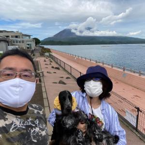 桜島とイングリッシュコッカー 2020!の巻