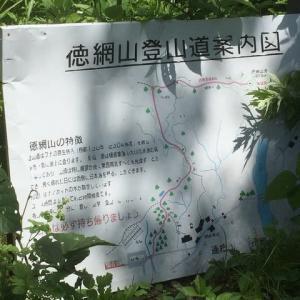 徳網山+<花>