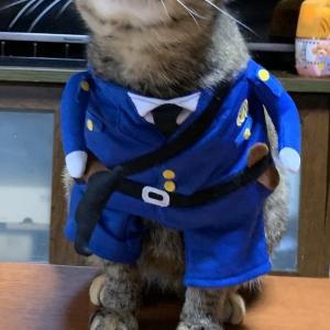 猫のチー警官