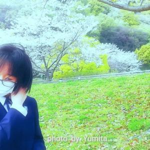 今 年 の は か な い 桜 と N a n a m i