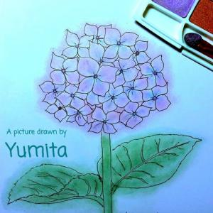 。・゜・空想から生まれた紫陽花・゜・。