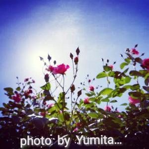 ☆ギネス世界公式認定☆ 世界で最も長い100人ブランコに揺られ♪ 毎年恒例のバラを観た日  ~in 福岡県北九州市グリーンパーク~
