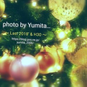 過去最高に暖かい冬のクリスマス ~Green tree~