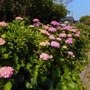 梅雨➡紫陽花➡メロン➡海水浴