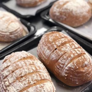 ライ麦パンと酵母の食べ比べ