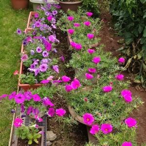 庭の花とブラックベリー