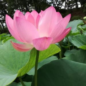 仏教の勧め【23】私が仏教を勧める理由は世界一素晴らしい唯一の宗教だからです