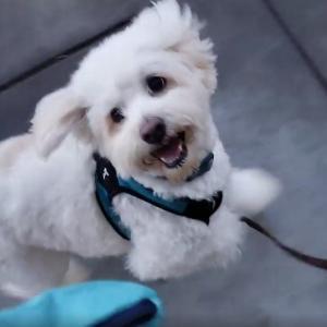 散歩で出来る犬のアンチエイジング
