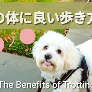 【犬の散歩】犬の体に良い歩き方