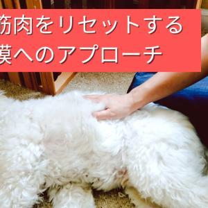 【犬の筋肉をリセットする】筋膜へのアプローチ