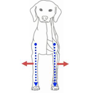 前足の間隔が広がっている犬から推測出来ること