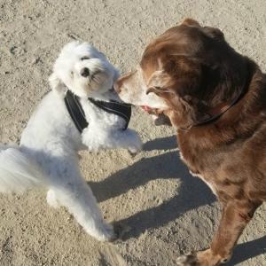 土を掘る、ワンプロする、アジリティをする犬にはここを撫でてあげて