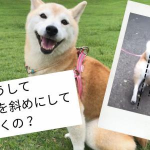 体を斜めにして歩く犬?
