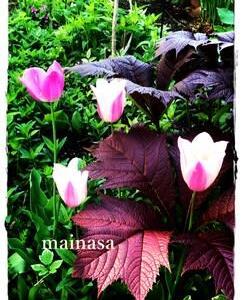 mainasa garden 春まとめ やっと咲いたチューリップ
