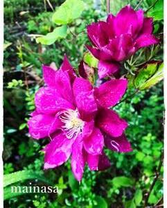 mainasa garden 6月の庭まとめ