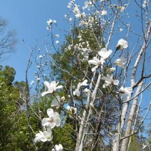 里山の花々。