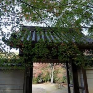 近くのお寺の紅葉。