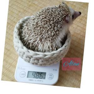 ハリネズミ~*あ~ちゃんの体重