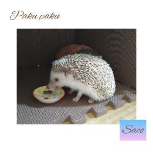 ハリネズミ~サコちゃん*の朝ご飯